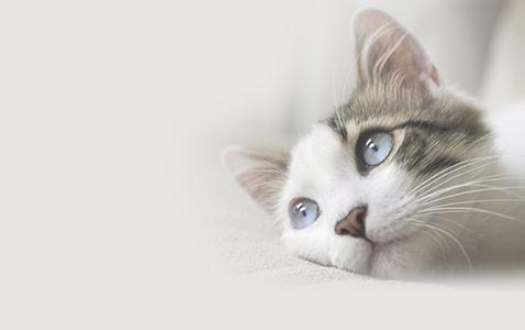 Urnes en forme de chat